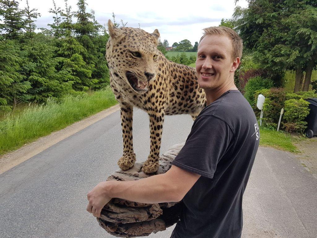 Flyttemand fra Flyttefirma Sjælland med en udstoppet leopard.